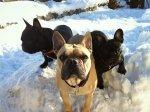Jasper, Duke & Indra