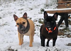 Jasper & Duke