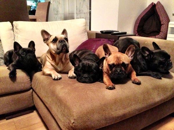 Indra, Jasper, Duke, Kemi & Liam (v. links nach r.)